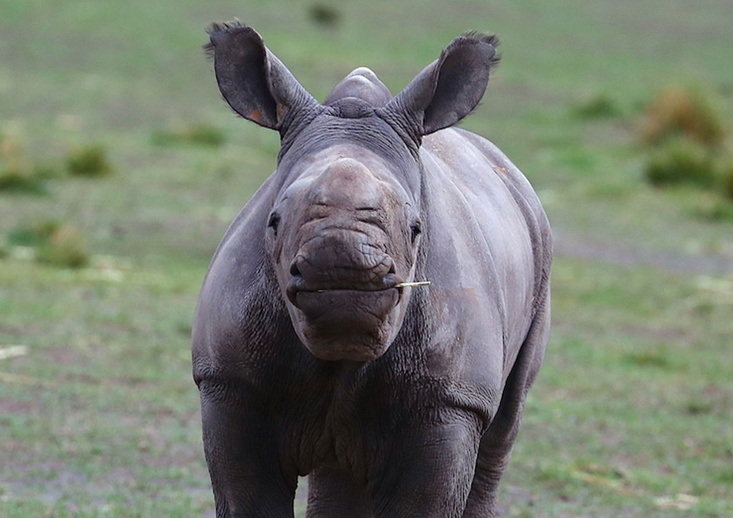 SPECIAL RECOGNITION – BLANKETS FOR BABY RHINOS